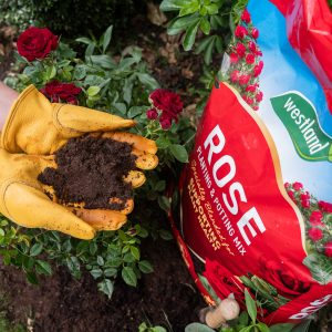 Specialist Compost